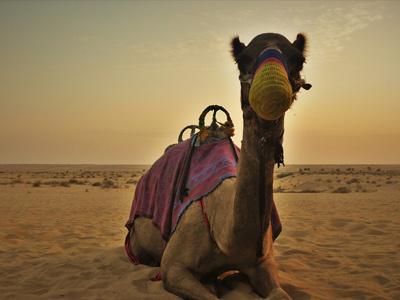 cabec-04-safari-desierto-sharjah-ofertas-vamos-a-dubai-emiratos-arabes-guia-turisticocuerpo-02