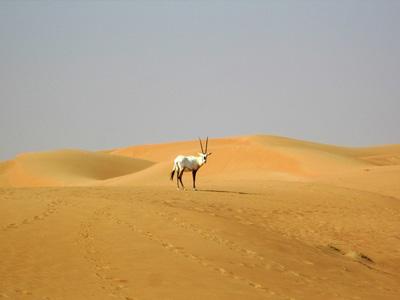 cabec-04-safari-desierto-sharjah-ofertas-vamos-a-dubai-emiratos-arabes-guia-turisticocuerpo-03